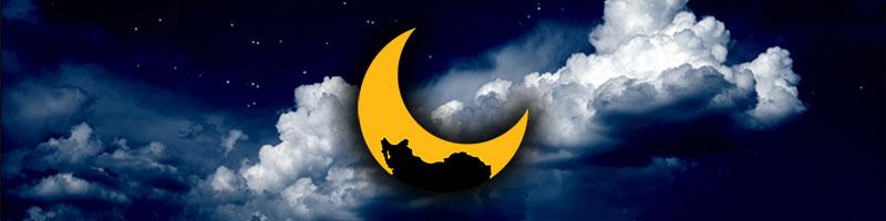 پخش و دانلود برنامه های شب بخیر ایران با اجرای بسیار زیبای سید محمد حسینی لیدر جنبش میلیونی ری استارت