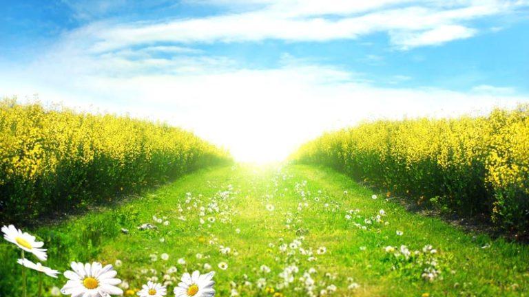 خورشید آفتاب فصل بهار
